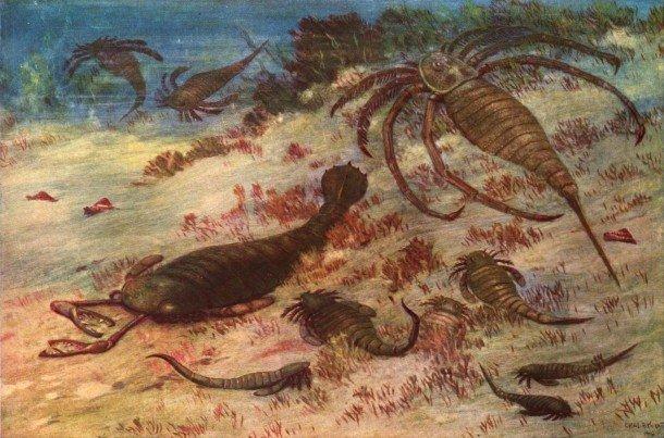 Факты о скорпионах, о которых вы могли не знать