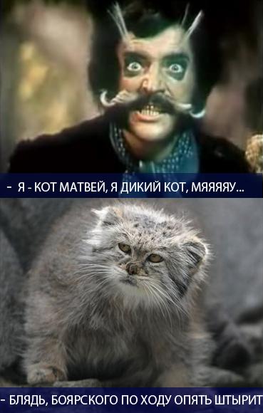 Кот матвей в картинках