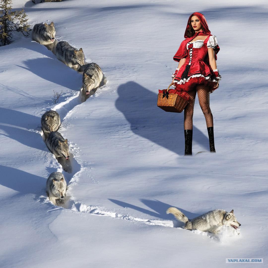 Волки в снегу демотиватор