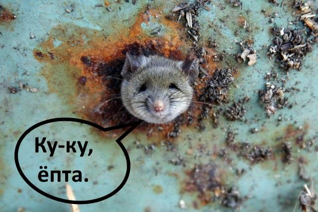 Влип крысеныш