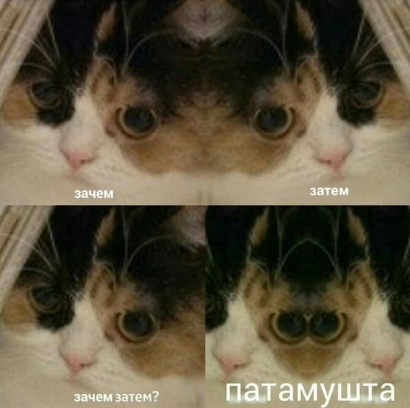 пачка затем картинка кот был