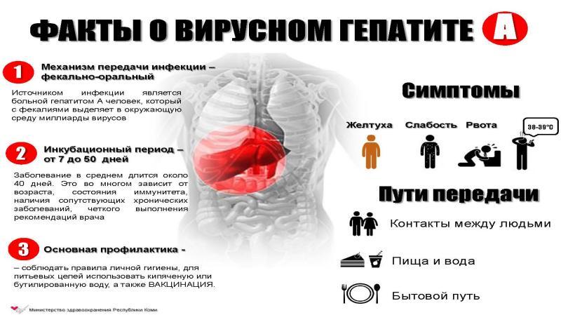 Буклеты по гепатиту картинки