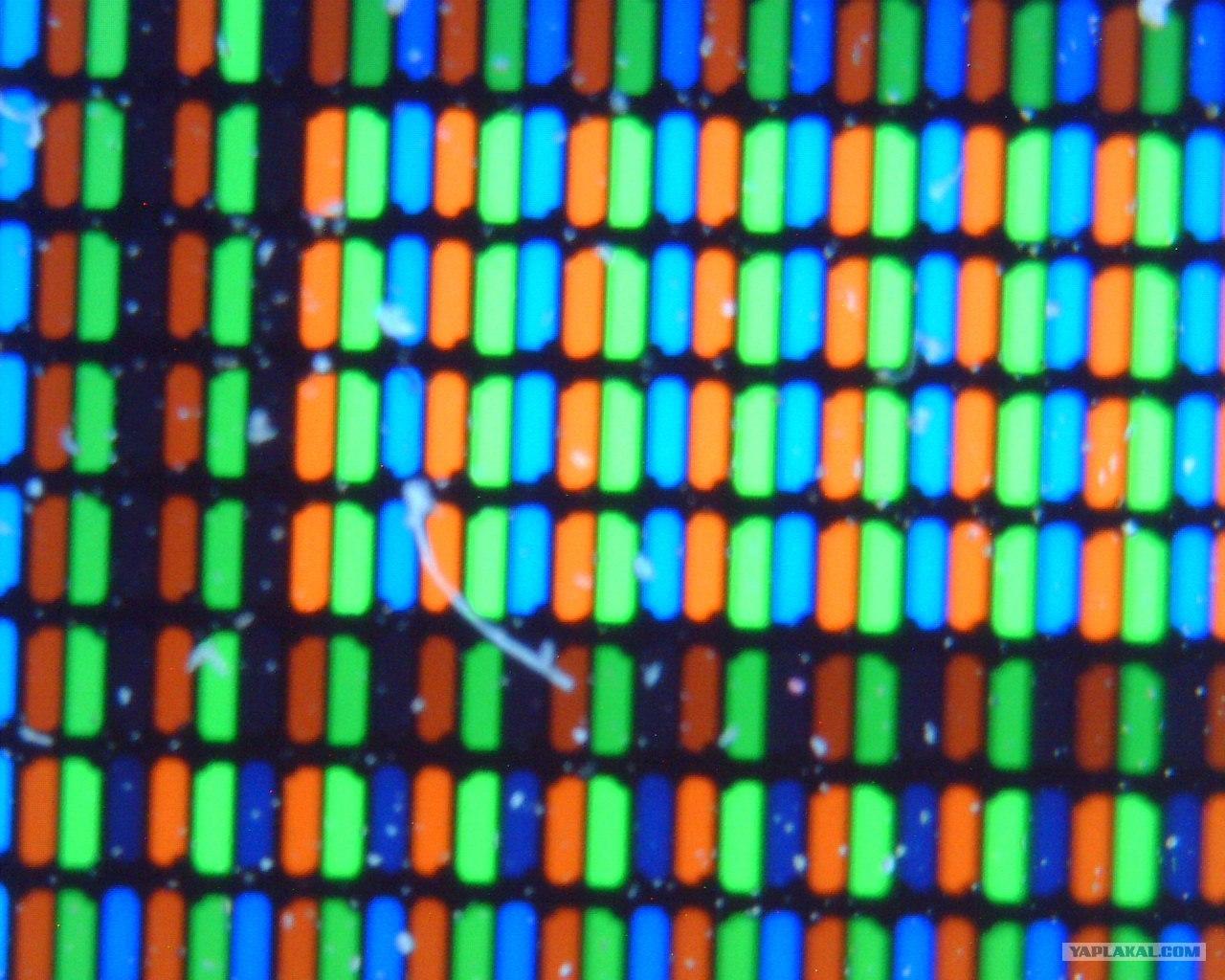 Клитор под микроскопом картинки — 12