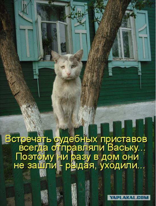 Коты из сети