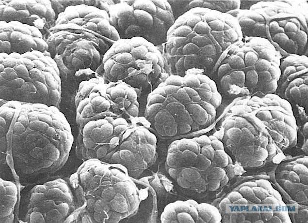 zhenskiy-sosok-pod-mikroskopom-foto