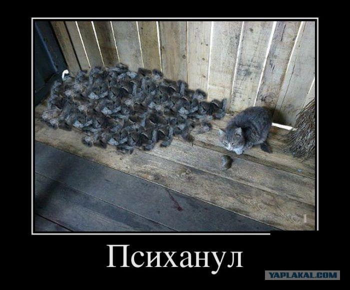 Коты ловят мух