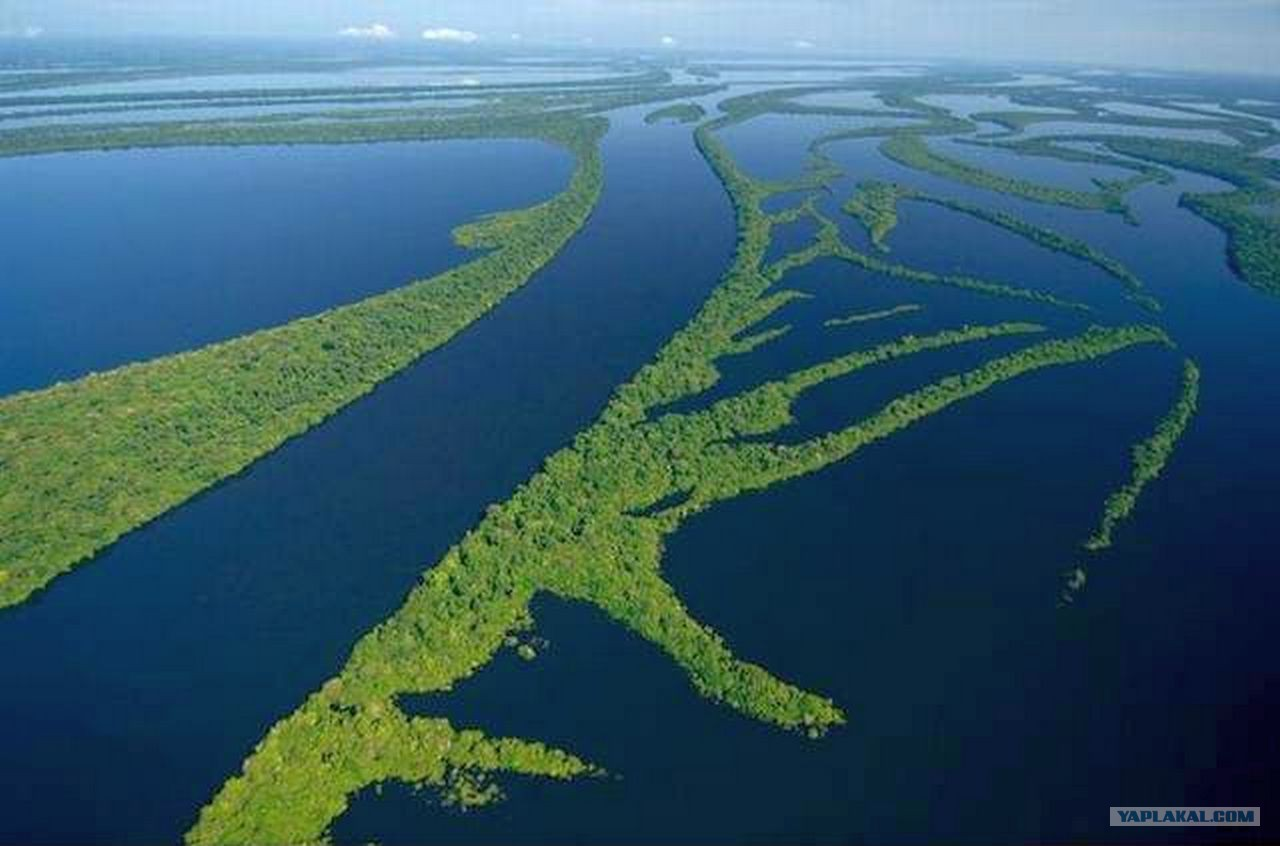 картинки амазонка река