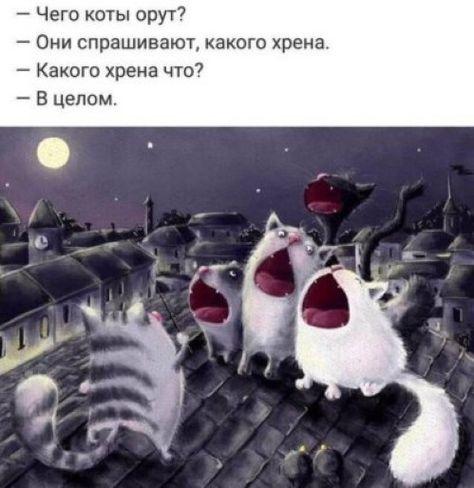 https://s00.yaplakal.com/pics/pics_original/4/5/4/14620454.jpg