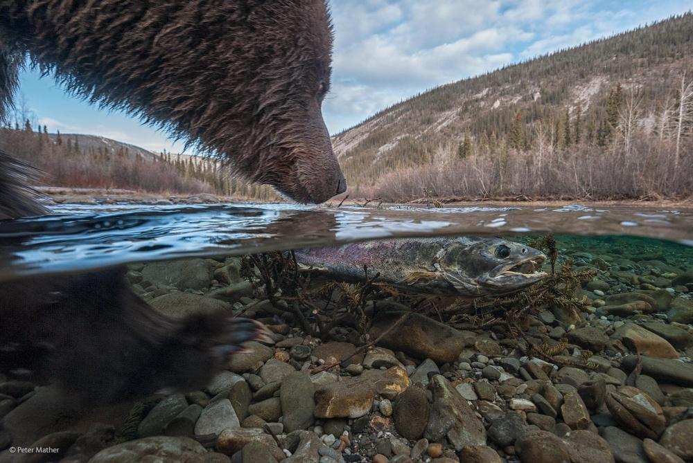 Лучшие фотографы природы