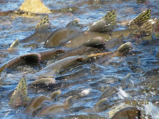 Берега речек после нереста лососевых