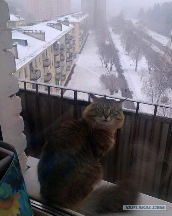 Котейки пост
