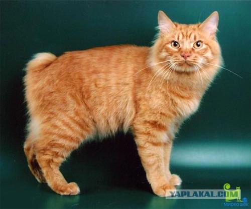 У кота длинные лапы