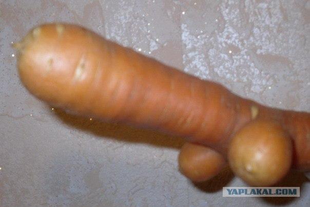 seks-tovarov-morkovka-vmesto-chlena-milf