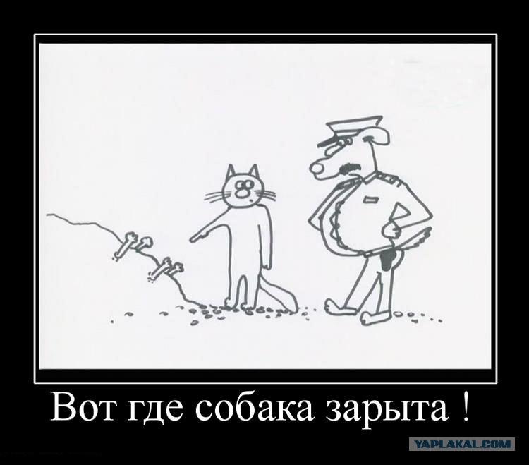 Картинки собака зарыта