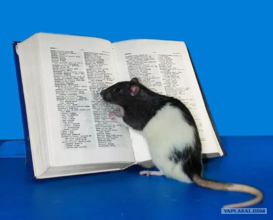 Опыт крыса и оргазм