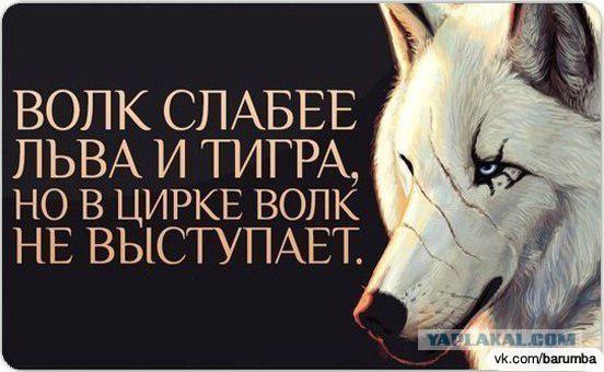 Работа с Волками.