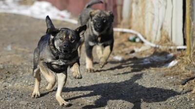 Две собаки до смерти загрызли семилетнего мальчика