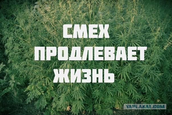 Шутка о конопле купить семечки марихуаны украина