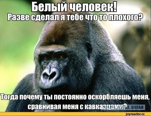А вот и сам красавчик, убивший Джабраила Джабраилова