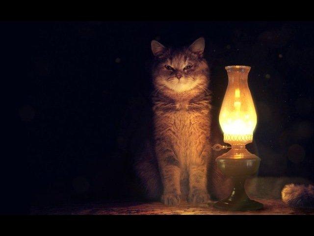 Служебные коты