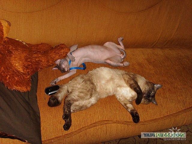 Усыпить кота челябинск