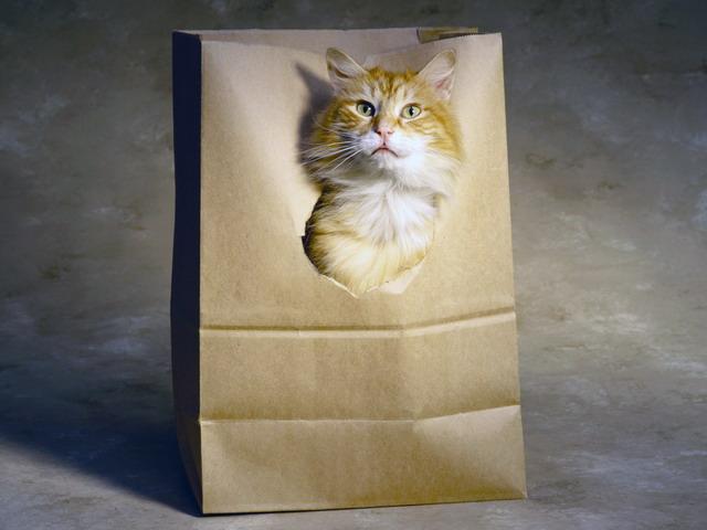 Котоматрица: Акция!при покупке на сумму 500руб кот в подарок!