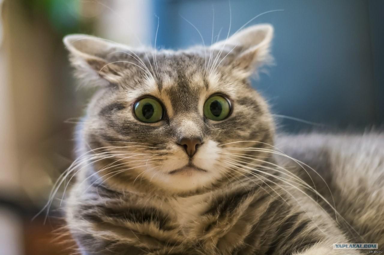 Картинка кот в шоке