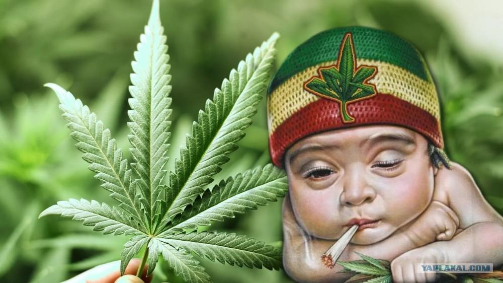 Прикол марихуаны марихуана и качалка