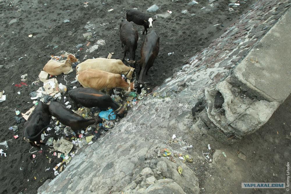 Жопа кения фото фото 670-205