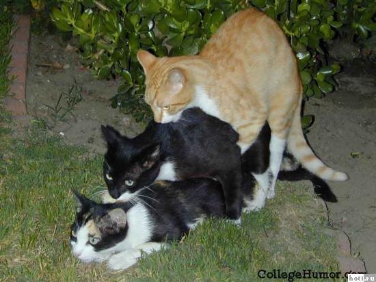 Ебуца коты