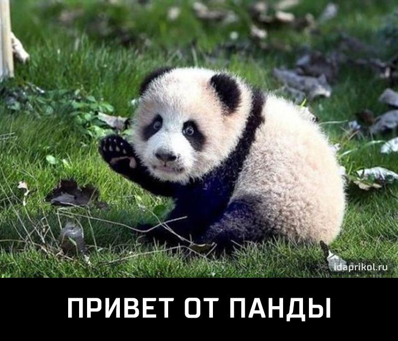 Пацан ссыт на другую панду