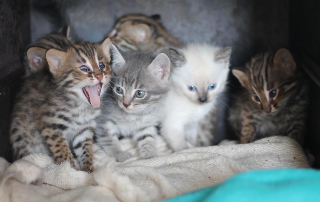фото обычных котят