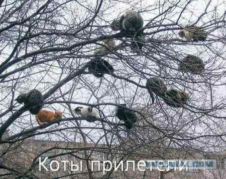 Снял кота с дерева видео