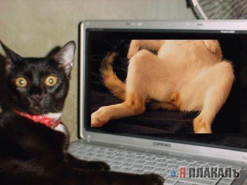 Кот смотрит порно