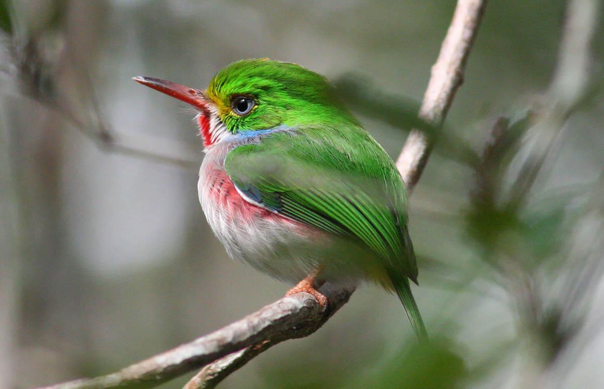 Картинки по запросу птицы экзотические