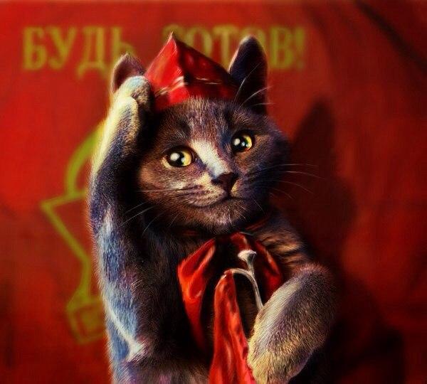 Смешные картинки коты ссср