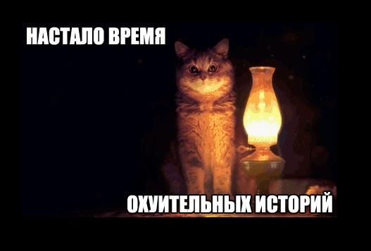 настало время офигительных историй кот картинка популярные стрижки