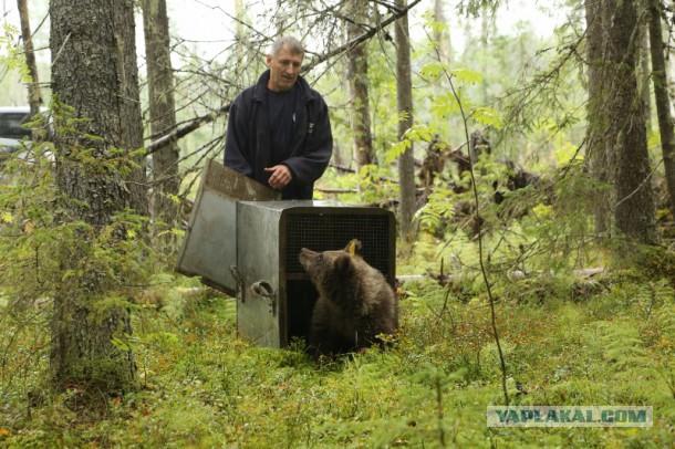 Охотники спасли плачущего медвежонка, попавшего в ловушку