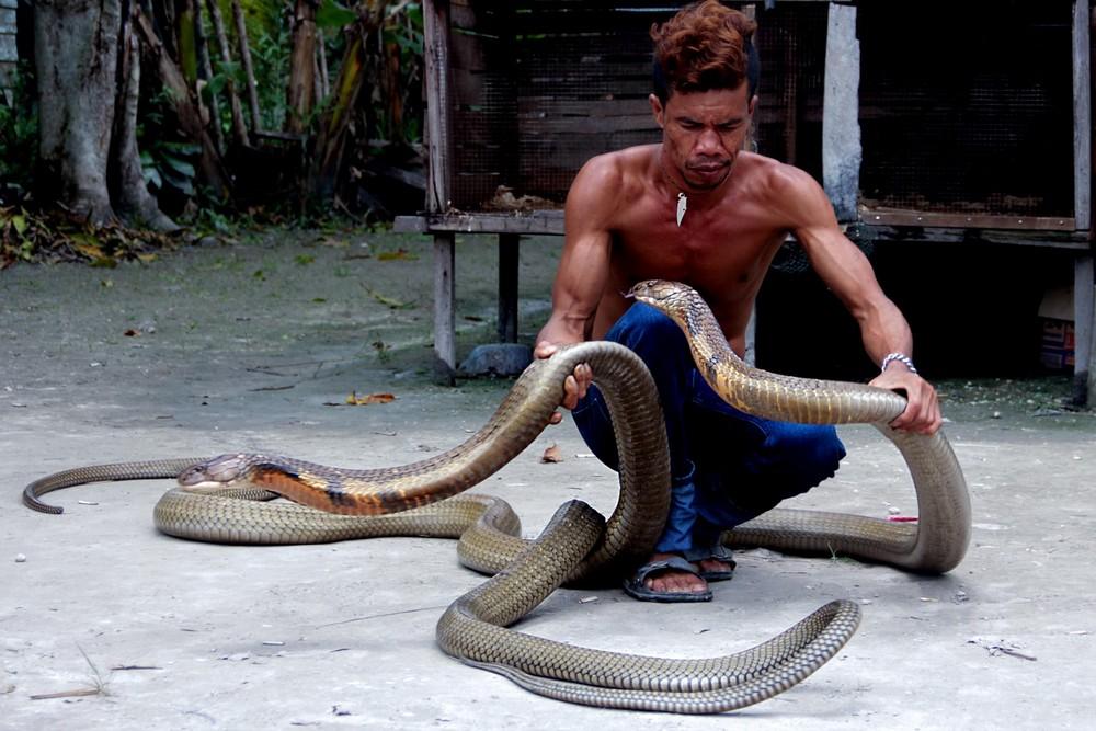 самая большая кобра фото описании цветка эухариса