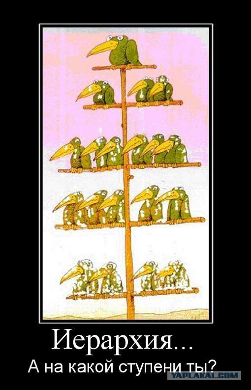 Субординация картинка с воронами