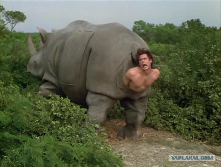 Секс поза носорог