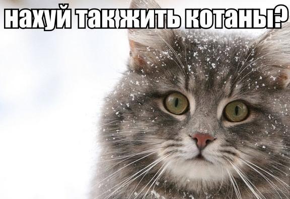 Приколы про котов скачать видео с
