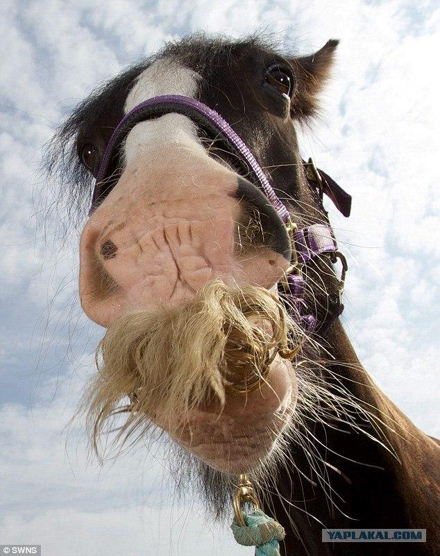 Прикольные картинки года лошади, памперсов