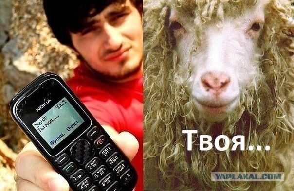 Картинки кавказа смешные