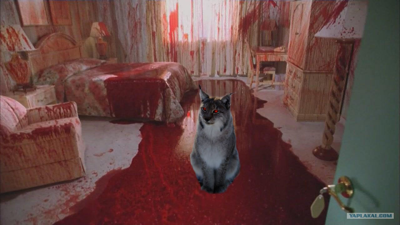 кровавая киска фото