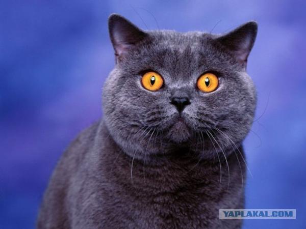 Самое популярное кличка у котов