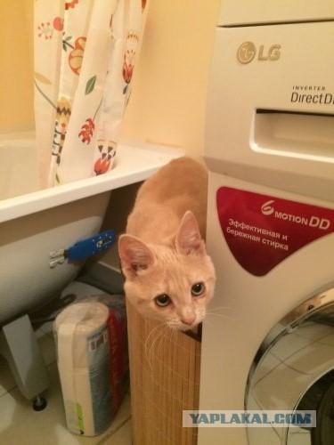 Как я кота нашёл