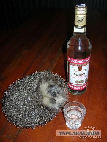 День пьяного ежика 28 ноября
