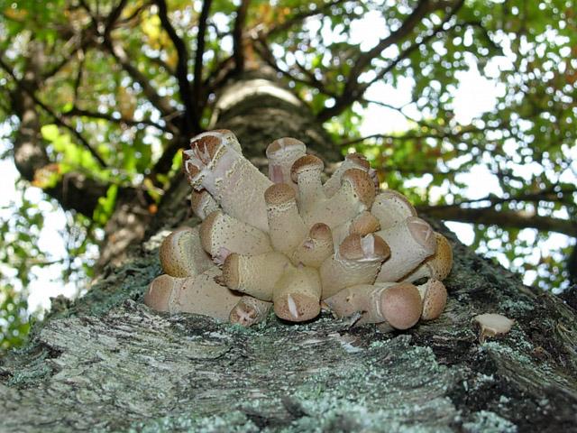 Смешное фото грибов