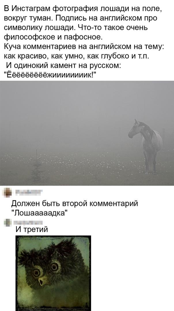 https://s00.yaplakal.com/pics/pics_original/6/0/0/15923006.jpg